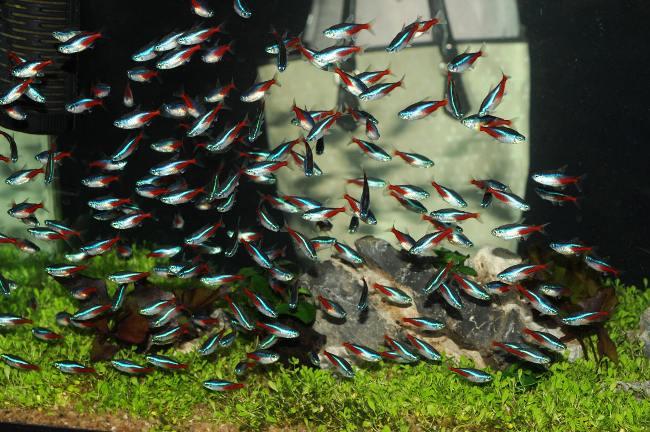 неоны голубые или обыкновенные