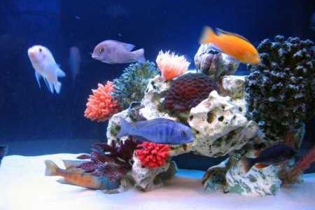 аквариум в стиле псевдоморе