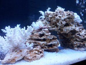 аквариум с камнями и кораллами