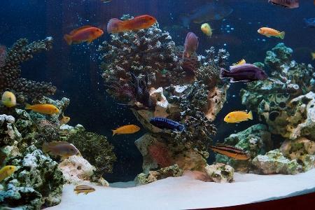 аквариум в стиле цихлидник псевдоморе