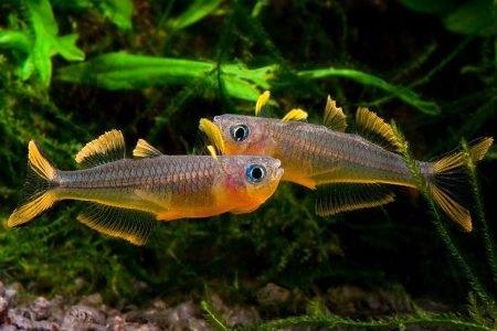 пара рыбок